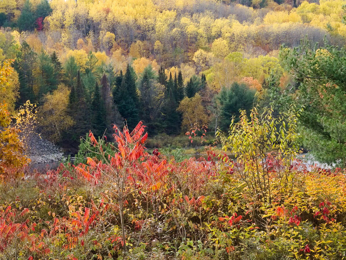 Fall colours  Rapides des Joachims  Swisha